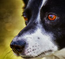 The love in her eyes by Maree Cardinale