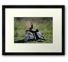 Who, Who Goes There? Framed Print