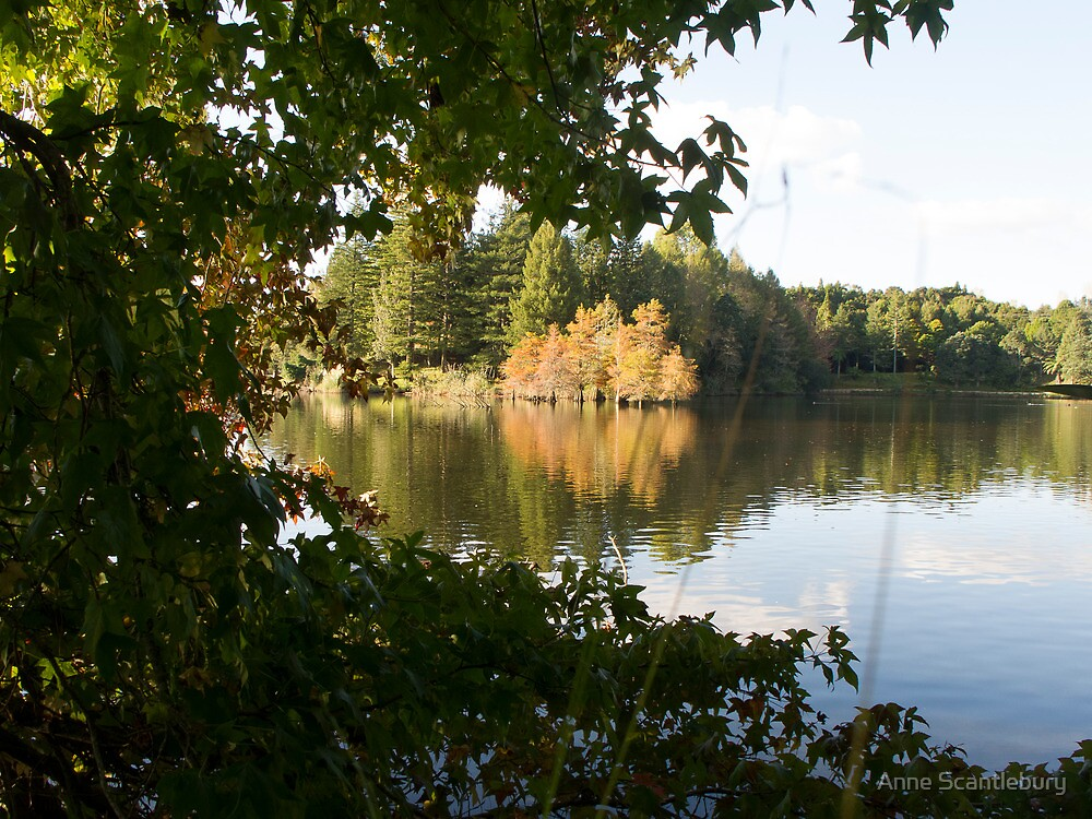reflections through the trees by Anne Scantlebury