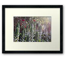 Spike Orchids Framed Print