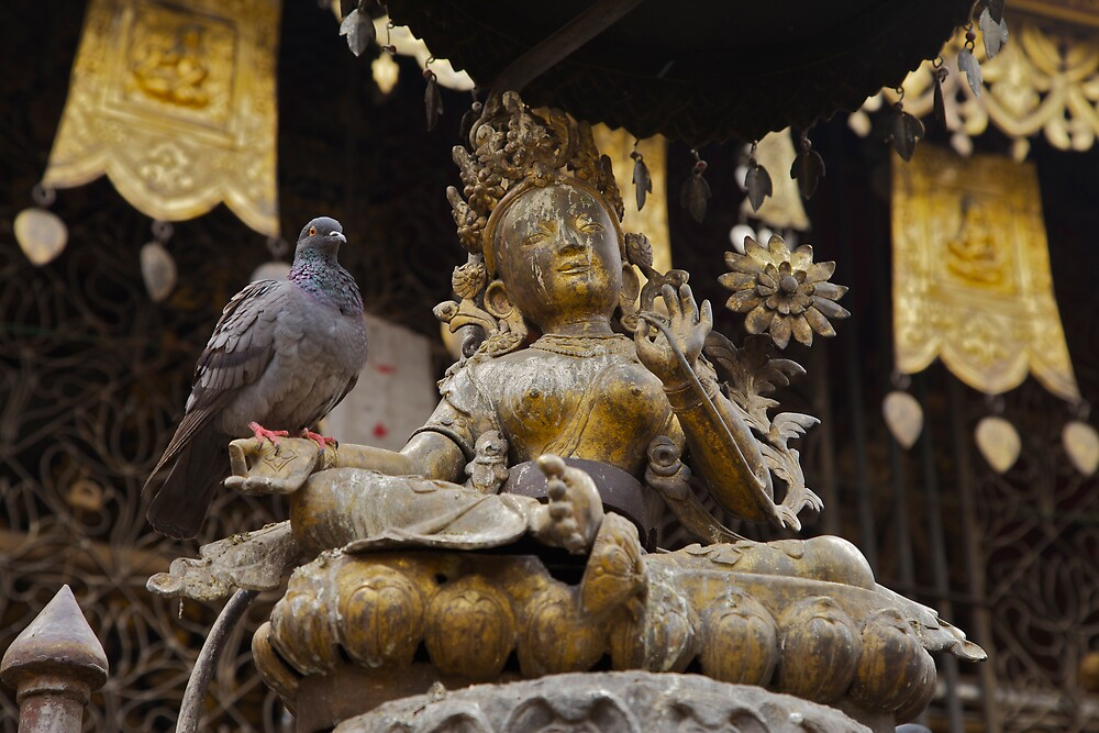 Buddha and a pigeon by John Spies