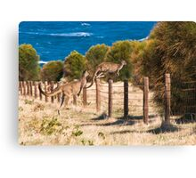 Flying kangaroos Canvas Print