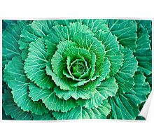 Cabbage Leaves Poster