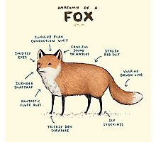 Anatomy of a Fox Photographic Print