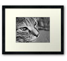 Cat in Black and White Framed Print