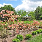 Mill Creek: Azaleas In Bloom by Jack Ryan