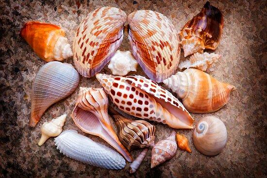 Seashells of Sanibel Island by Bonnie T.  Barry