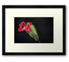 A Spring Favourite - image 2 Framed Print