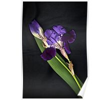 Purple Flags Poster