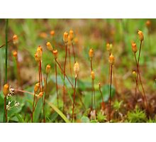 Micro Forest Photographic Print
