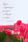 My Grace is Sufficient - Pink Tulip (Card) by Tracy Friesen