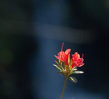 Azalea by Mike  Kinney