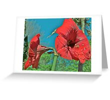 Red Amaryllis 3  Greeting Card