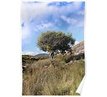 strong isolated mountain tree Poster