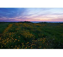 Sky, Flowers and Sea Photographic Print