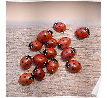 Ladybird Cluster Poster