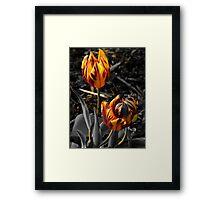 Rembrandt Tulips{selectively coloured} Framed Print