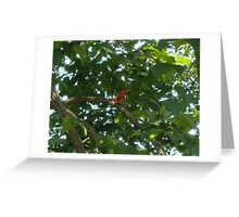 Cardinal Eating A mulberry Greeting Card