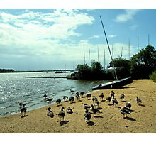 Norfolk Geese Photographic Print