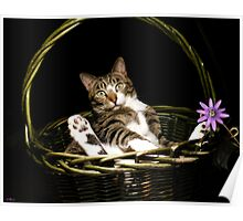 Bodhi the Basket Cat Poster