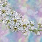 Spring is Here by Sheri Nye