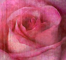 Faded Rose by Kelly Rockett-Safford