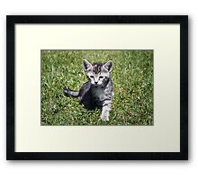 Clank the Kitten Framed Print