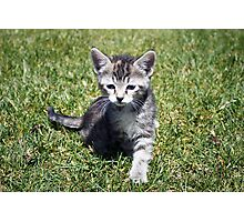 Clank the Kitten Photographic Print