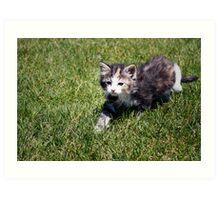 Calvin the Kitten Art Print