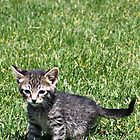 Ratchet the Kitten by Jewel Pfaffroth