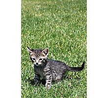 Ratchet the Kitten Photographic Print