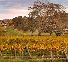 Autumn Vines - Nairne, Adelaide Hllls, South Australia by Mark Richards
