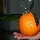 A very large orange by Kate Fortune