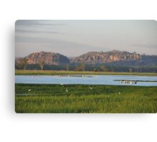Pelicans- Early Morning in Oenpelli Northern Territory Australia Canvas Print