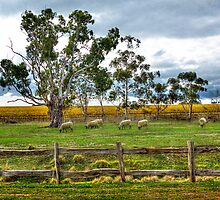 Wool & Wine - McLaren Vale, South Australia by Mark Richards