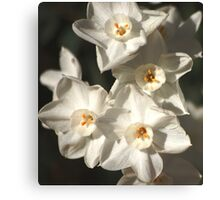 Still spring Canvas Print