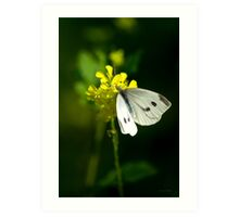 Cabbage White Butterfly Art Art Print