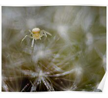 dandelion and baby Poster