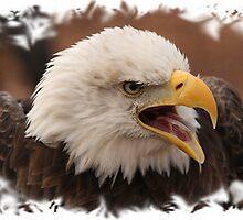 Bald Eagle framed. by Gregg Williams