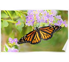 Monarch and Lavender Flowers Poster