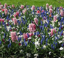 Pink Hyacinths and Blue Muscari - Keukenhof Gardens by MidnightMelody