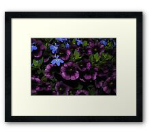 Purple with a Touch of Blue Framed Print