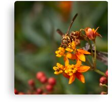 Wasp on milkweed Canvas Print