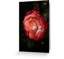 A Wonderful Cream-and-Red Rose With Dewdrops Greeting Card
