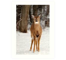 Deer in Snow Art Print