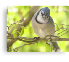 Jay So Sweet Metal Print