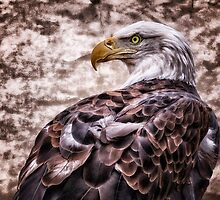 Bald Eagle by Keri Harrish