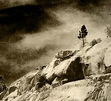 One Tree on a Ledge by Corri Gryting Gutzman