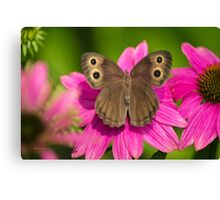 Pretty Butterfly with Flowers Canvas Print
