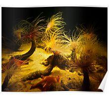 String Anemones Poster